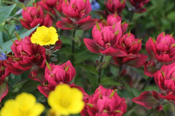Brilliant Colorado wildflowers. Photo by Brycen McCright